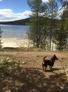 My dog Diesel enjoyed the stay at Savalen.